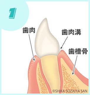 健康な状態|歯周病の進行の仕方